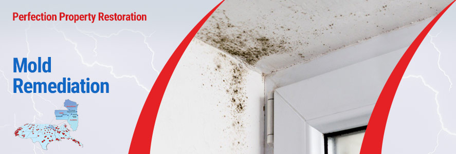 Mold Damage Service